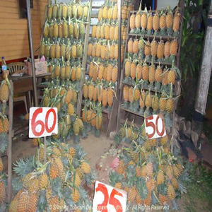 Pineapple in Belummahara
